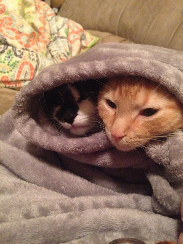 Chân dung 15 boss mèo lười nhác chỉ thích nằm cuộn tròn trong chăn - Ảnh 27.