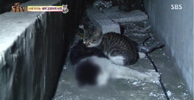 Chú mèo con chỉ ăn sỏi đá và cành cây, để dành thịt mang về cho mèo mẹ đã chết - Ảnh 2.