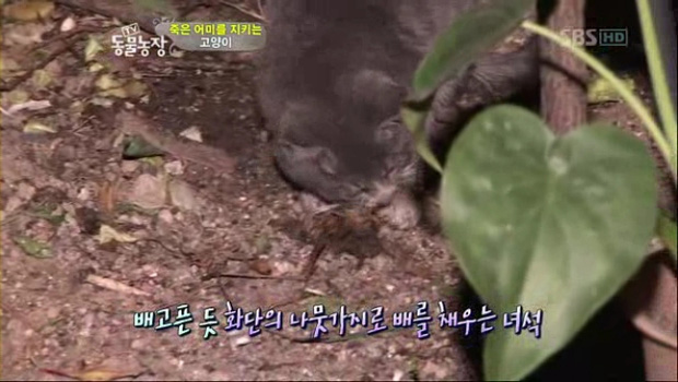 Chú mèo con chỉ ăn sỏi đá và cành cây, để dành thịt mang về cho mèo mẹ đã chết - Ảnh 3.