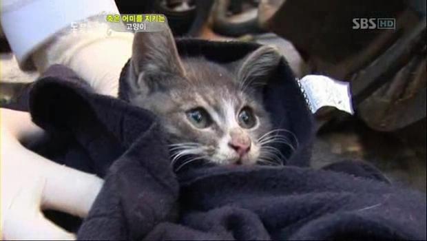 Chú mèo con chỉ ăn sỏi đá và cành cây, để dành thịt mang về cho mèo mẹ đã chết - Ảnh 4.