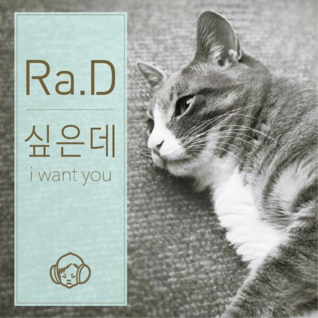 Chú mèo con chỉ ăn sỏi đá và cành cây, để dành thịt mang về cho mèo mẹ đã chết - Ảnh 5.