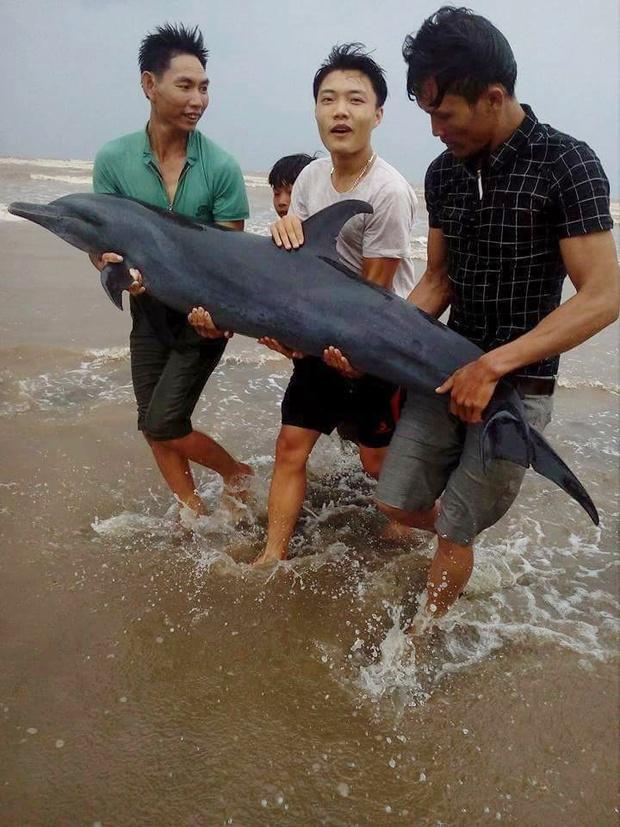 Ngư dân Nghệ An giải cứu thành công cá heo mắc cạn trên bờ biển trước khi cơn bão số 2 đổ bộ - Ảnh 1.