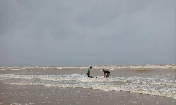 Ngư dân Nghệ An giải cứu thành công cá heo mắc cạn trên bờ biển trước khi cơn bão số 2 đổ bộ - Ảnh 2.