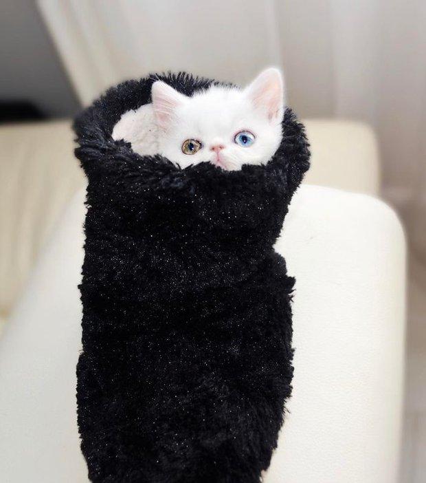 Chú mèo xinh đẹp sở hữu đôi mắt hai màu lấp lánh tựa pha lê - Ảnh 9.