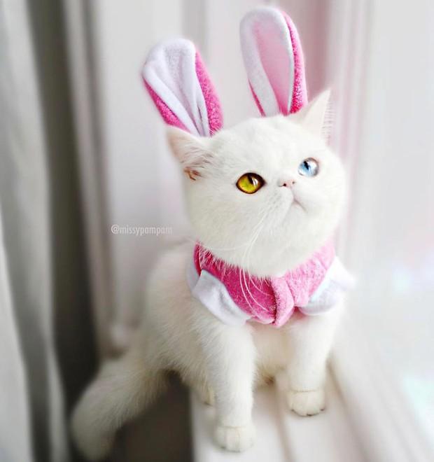 Chú mèo xinh đẹp sở hữu đôi mắt hai màu lấp lánh tựa pha lê - Ảnh 13.