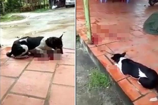 Phẫn nộ clip người phụ nữ thản nhiên chặt chân chú chó còn sống ngay trước hiên nhà - Ảnh 3.