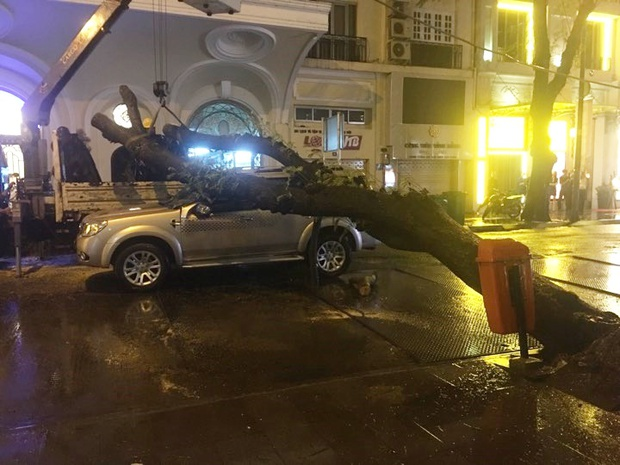 TP. HCM: Cây xanh trên đường Đồng Khởi bật gốc sau cơn mưa lớn, ngã đè trúng ô tô đang lưu thông - Ảnh 1.