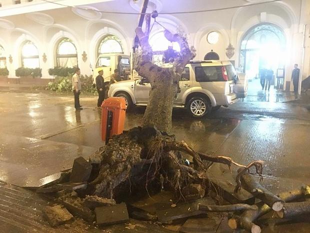 TP. HCM: Cây xanh trên đường Đồng Khởi bật gốc sau cơn mưa lớn, ngã đè trúng ô tô đang lưu thông - Ảnh 2.