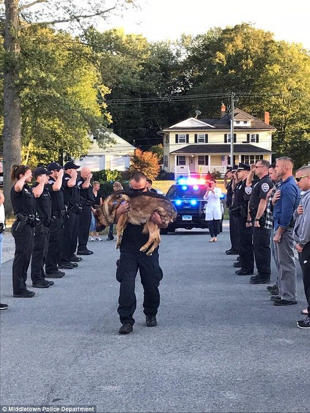 Cảnh sát đứng nghiêm trang tiễn đưa chú chó nghiệp vụ dũng cảm bị mắc bệnh ung thư - Ảnh 1.