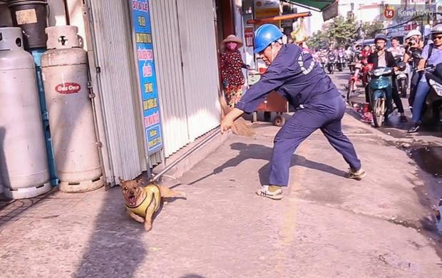 """Clip: Tiếp tục ra quân bắt chó thả rông ở Sài Gòn, nhiều chó nhà bị Đội săn bắt """"tóm"""" khiến chủ ngơ ngác - Ảnh 5."""