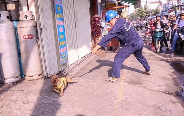 Chú chó đang tắm nắng ngoài đường nhưng không rọ mõm nên bị bắt.