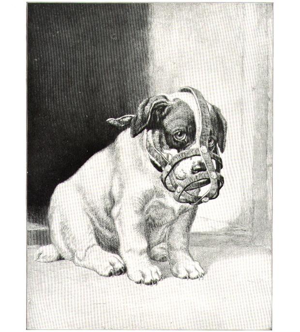 Ngỡ chỉ có ở thời hiện đại nhưng ai ngờ luật bắt rọ mõm cún cưng khi ra đường đã xuất hiện từ thời cổ đại - Ảnh 4.