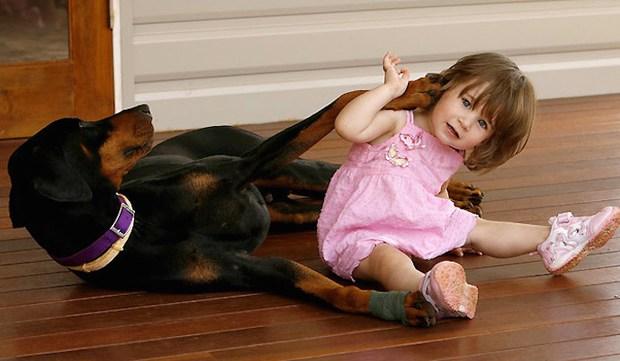 Mẹ hốt hoảng khi chó doberman vừa nhận nuôi tha con gái nhỏ ném đi xa cả mét, nhưng hóa ra đó là hành động anh hùng - Ảnh 4.