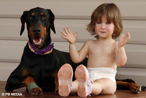 Mẹ hốt hoảng khi chó doberman vừa nhận nuôi tha con gái nhỏ ném đi xa cả mét, nhưng hóa ra đó là hành động anh hùng - Ảnh 3.