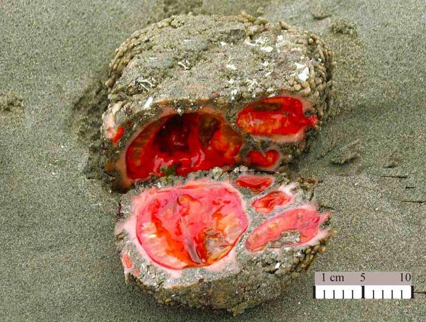 Ngỡ vô tri vô giác nhưng khi bị cắt ra, hòn đá này chảy máu - Ảnh 2.