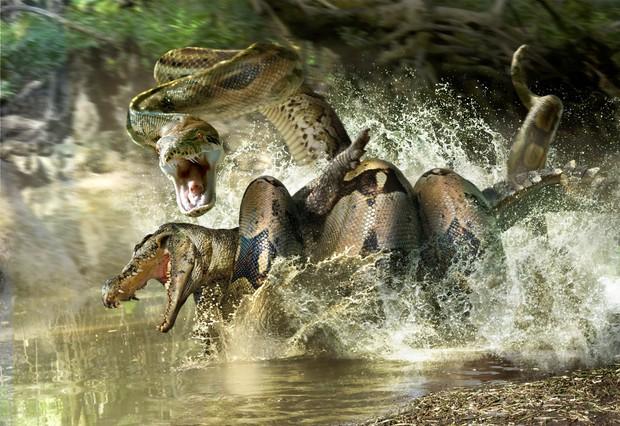 Nghĩ trăn Anaconda là ghê gớm? Có một loài trăn còn khủng bố gấp 2 lần cơ! - Ảnh 3.