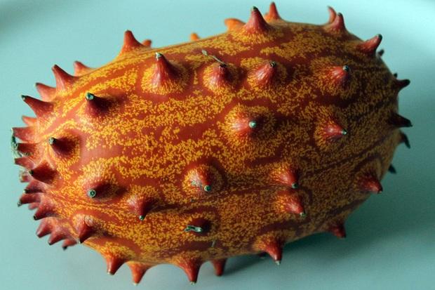 Mổ xẻ loại quả ngoài hành tinh - thân nhiều gai giống sâu nhưng ruột lại giống dưa chuột - Ảnh 1.