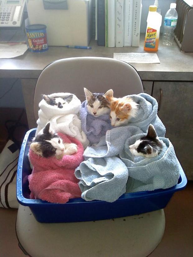 Chân dung 15 boss mèo lười nhác chỉ thích nằm cuộn tròn trong chăn - Ảnh 19.