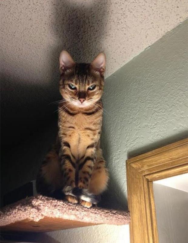 17 biểu cảm chứng tỏ mèo là bọn diễn sâu nhất quả đất - Ảnh 15.