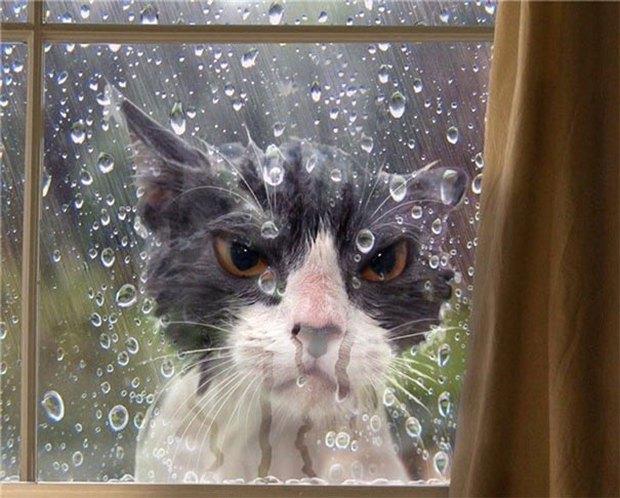 17 biểu cảm chứng tỏ mèo là bọn diễn sâu nhất quả đất - Ảnh 19.