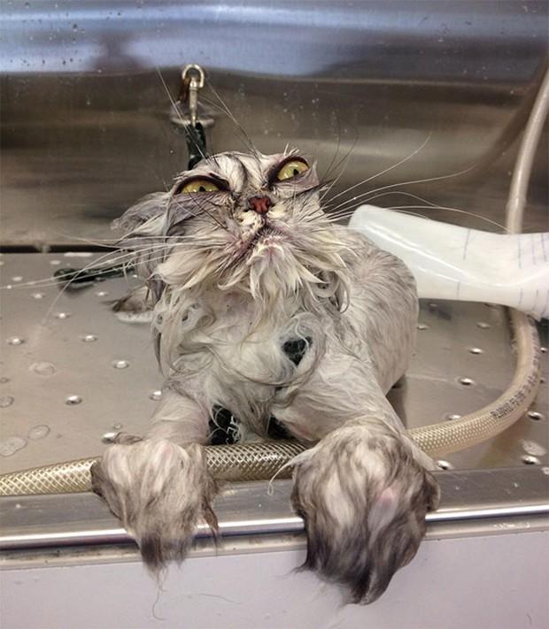17 biểu cảm chứng tỏ mèo là bọn diễn sâu nhất quả đất - Ảnh 27.