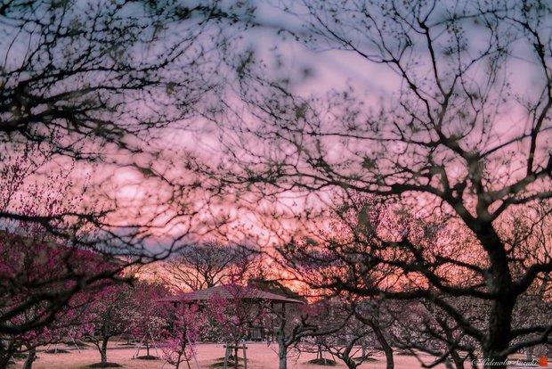 Nhật Bản vào mùa hoa mận nở trở nên đẹp đến nao lòng - Ảnh 13.