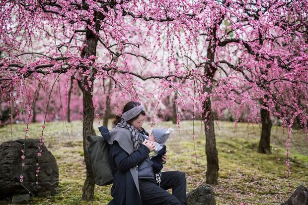 Nhật Bản vào mùa hoa mận nở trở nên đẹp đến nao lòng - Ảnh 17.