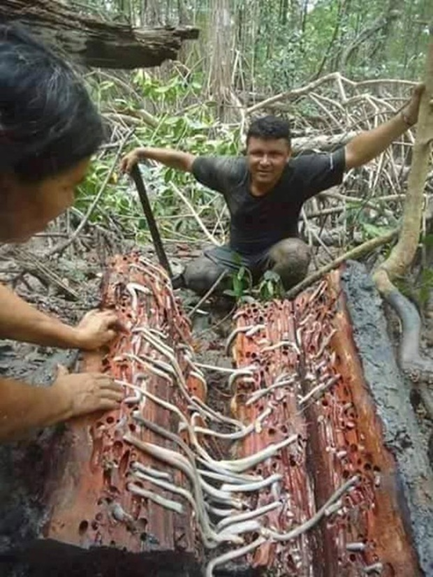 Mất cả trăm năm người ta mới tìm thấy sinh vật ngoằn ngoèo dài gần 2m này - Ảnh 3.