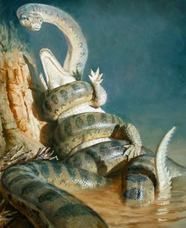 Nghĩ trăn Anaconda là ghê gớm? Có một loài trăn còn khủng bố gấp 2 lần cơ! - Ảnh 2.