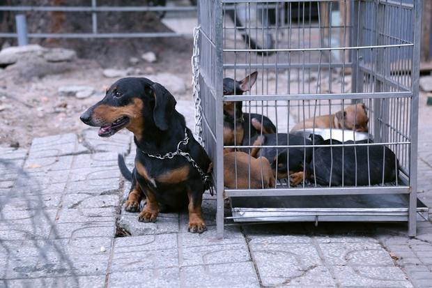 Hàng chục gian hàng gần sân bay Tân Sơn Nhất ồ ạt thanh lý chó, gà, cây cảnh, giao thông Sài Gòn hỗn loạn - Ảnh 8.