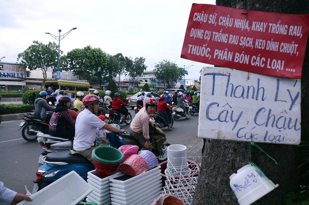 Hàng chục gian hàng gần sân bay Tân Sơn Nhất ồ ạt thanh lý chó, gà, cây cảnh, giao thông Sài Gòn hỗn loạn - Ảnh 6.