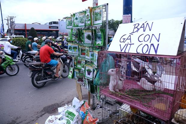 Hàng chục gian hàng gần sân bay Tân Sơn Nhất ồ ạt thanh lý chó, gà, cây cảnh, giao thông Sài Gòn hỗn loạn - Ảnh 5.