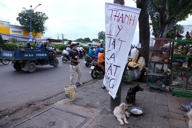 Hàng chục gian hàng gần sân bay Tân Sơn Nhất ồ ạt thanh lý chó, gà, cây cảnh, giao thông Sài Gòn hỗn loạn - Ảnh 3.