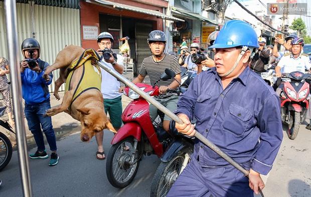 """Clip: Tiếp tục ra quân bắt chó thả rông ở Sài Gòn, nhiều chó nhà bị Đội săn bắt """"tóm"""" khiến chủ ngơ ngác - Ảnh 7."""