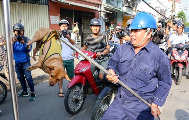 Chú chó bị tóm gọn đưa lên xe chuyên dụng nhốt lại.