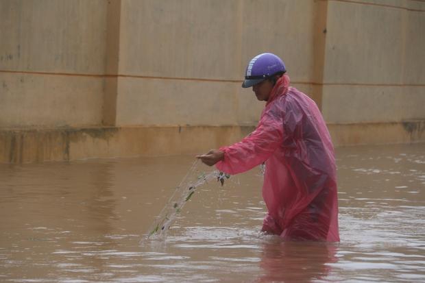 Sau bão số 10, người dân Quảng Bình quăng chài, thả lưới bắt cá giữa phố - Ảnh 3.