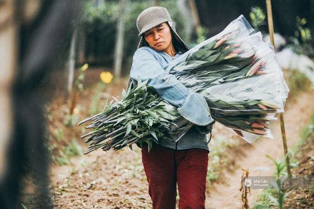 Mùa đông quá ngắn, bạn buồn vì không được mặc đồ lạnh, còn với các làng hoa ở Hà Nội - họ mất Tết! - Ảnh 2.