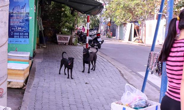 Hai con màu đen đang thả rông trước vỉa hè đang ngơ ngác thì...