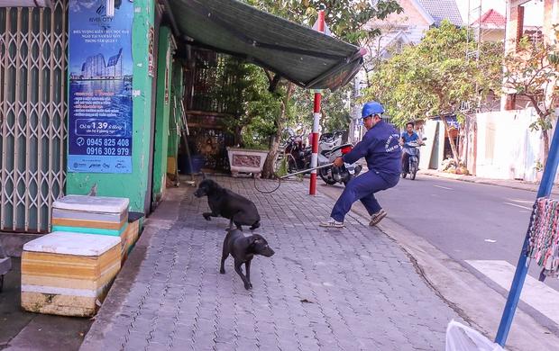Nhân viên Đội săn bắt chó lao đến dùng thòng lọng để