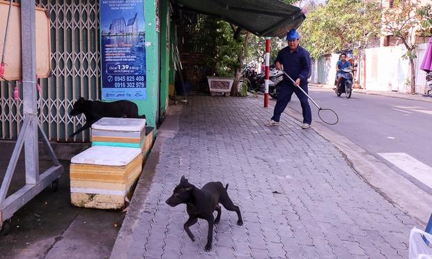 Tuy nhiên, 2 con chó đã kịp né và chạy thoát vào nhà với chủ nhân.