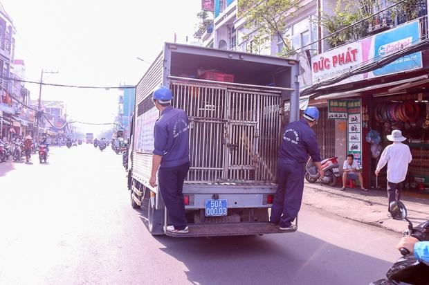 Đội săn bắt chó TP. HCM đang thực hiện công việc thường ngày là bắt giữ chó thả rông, không rọ mõm.