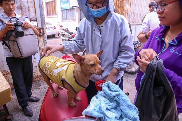 Sau đó chị Vy nhận chó về nhà chăm sóc.
