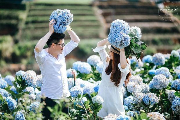 Cánh đồng hoa cẩm tú cầu đẹp mê hồn sẽ là điểm đến hot nhất ở Đà Lạt những ngày tới! - Ảnh 5.