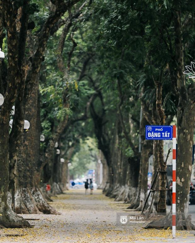 Những ngày Hà Nội rất nóng, nhưng lòng dịu lại vì cảnh lá rụng đẹp như mùa thu thứ 2 - Ảnh 8.