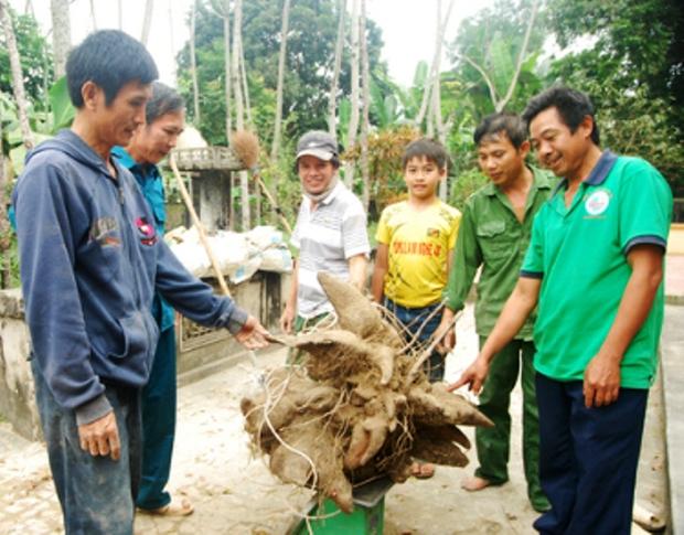 Xôn xao củ khoai vạc rồng khủng nặng 73kg ở Nghệ An - Ảnh 2.