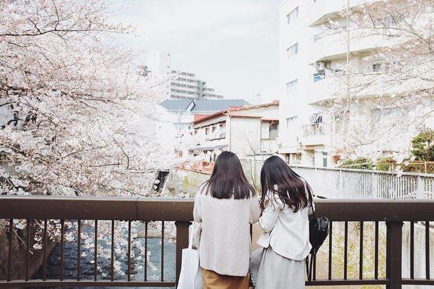 Ra đây mà xem người ta kéo nhau sang Nhật ngắm hoa anh đào hết rồi! - Ảnh 3.