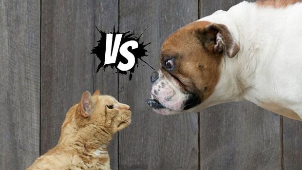 Chó hay mèo yêu con người hơn? Đã có kết luận chính thức từ khoa học! - Ảnh 1.