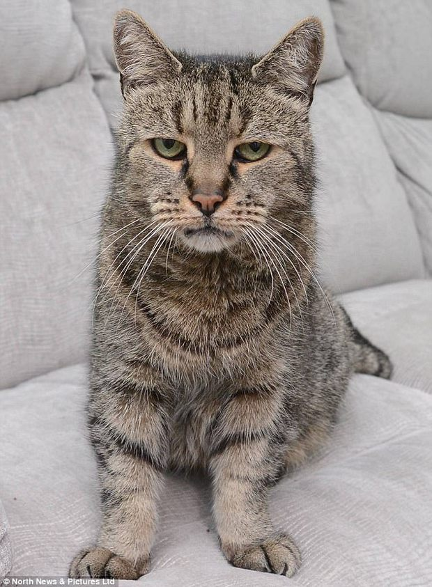 Sống 32 năm trên đời, cụ mèo già tương đương 144 tuổi ở con người - Ảnh 2.