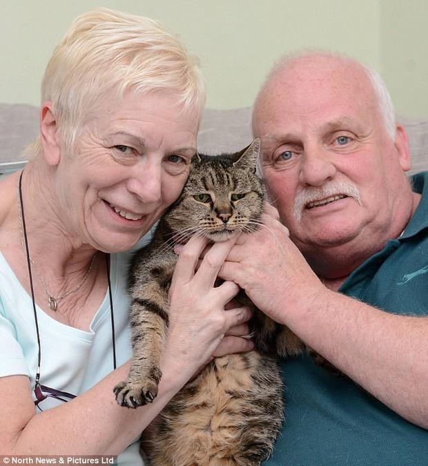Sống 32 năm trên đời, cụ mèo già tương đương 144 tuổi ở con người - Ảnh 3.