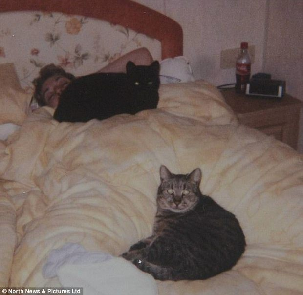 Sống 32 năm trên đời, cụ mèo già tương đương 144 tuổi ở con người - Ảnh 4.